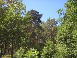 наступает лето, отдых в лесу
