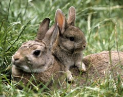 Bunny and rabbit - forest dwellers