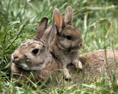 Лесные жители зайчиха и зайчонок