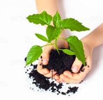 Викторина « Прекрасный мир растений»